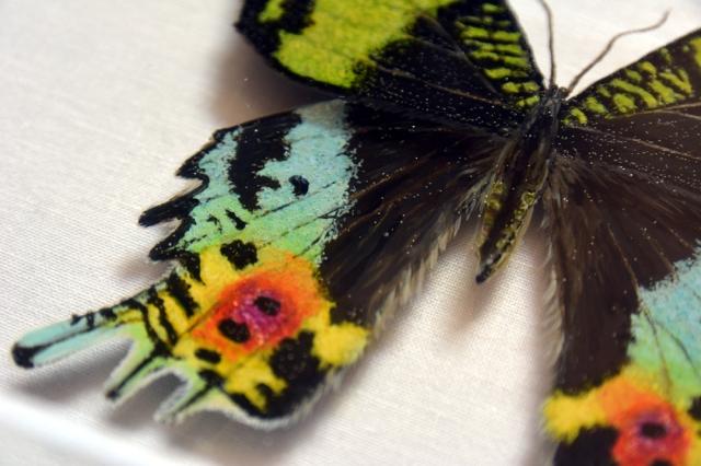 Hisham Echafaki - Sunset Moth (detail)