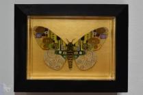 Hisham - Klimt Moth